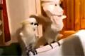 Попугаи в клубе