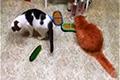 Огурцы и кошки